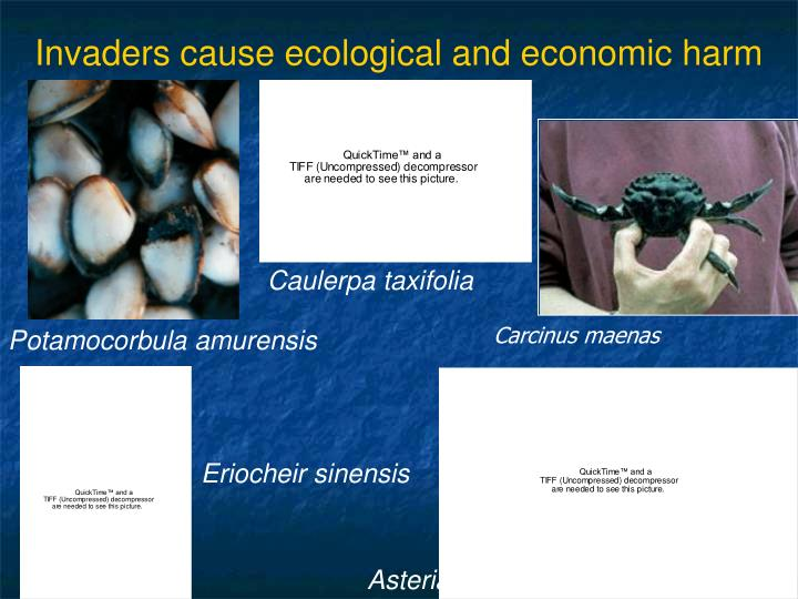 Invaders cause ecological and economic harm