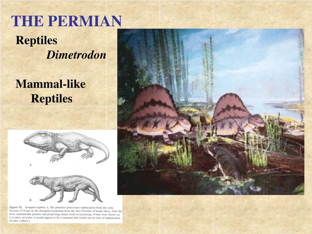THE PERMIAN