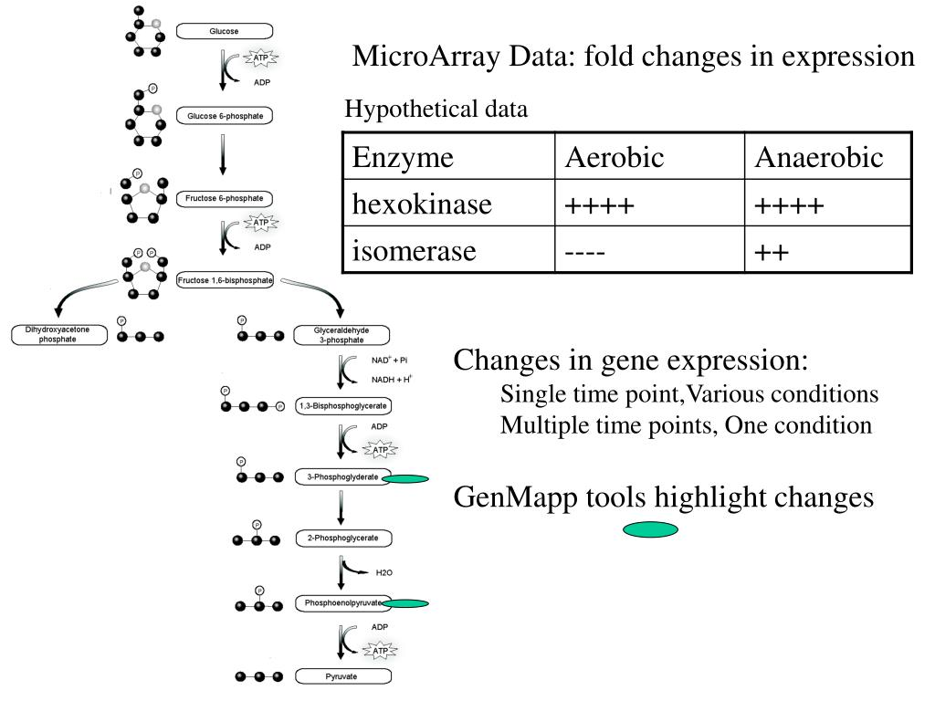 MicroArray Data: fold changes in expression
