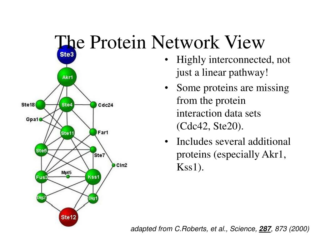 The Protein Network View