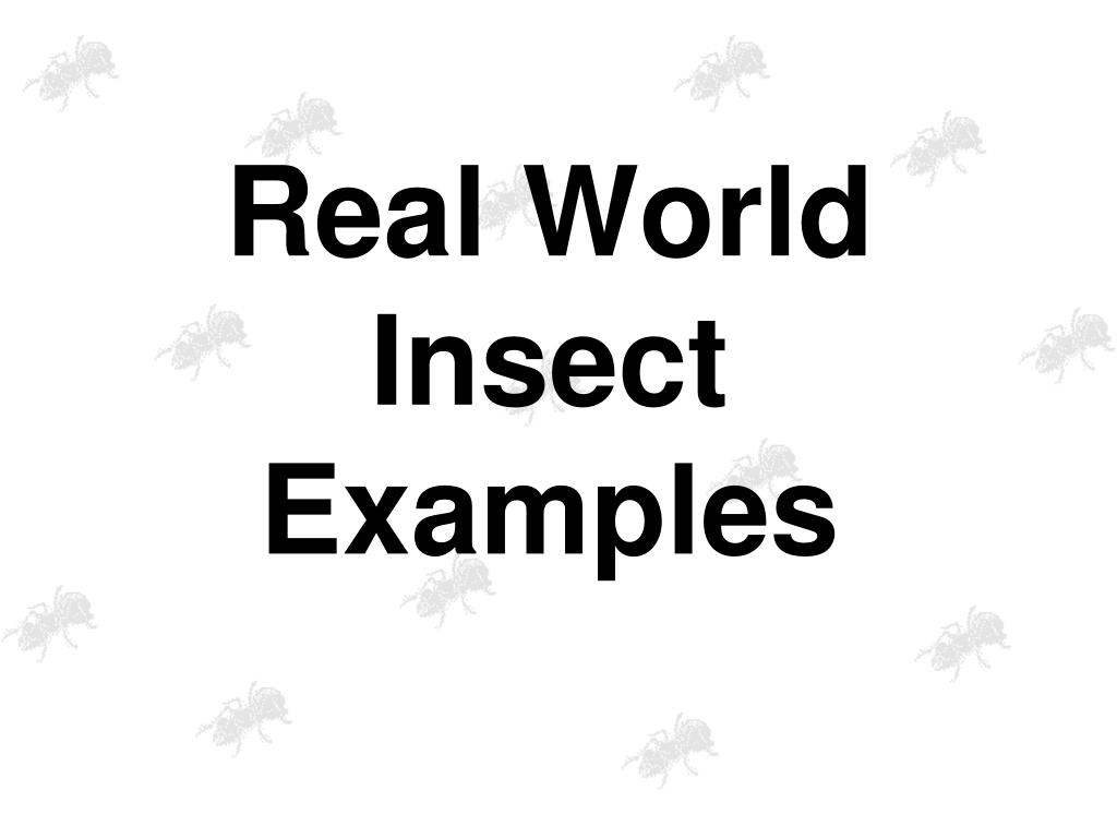 Real World Insect Examples