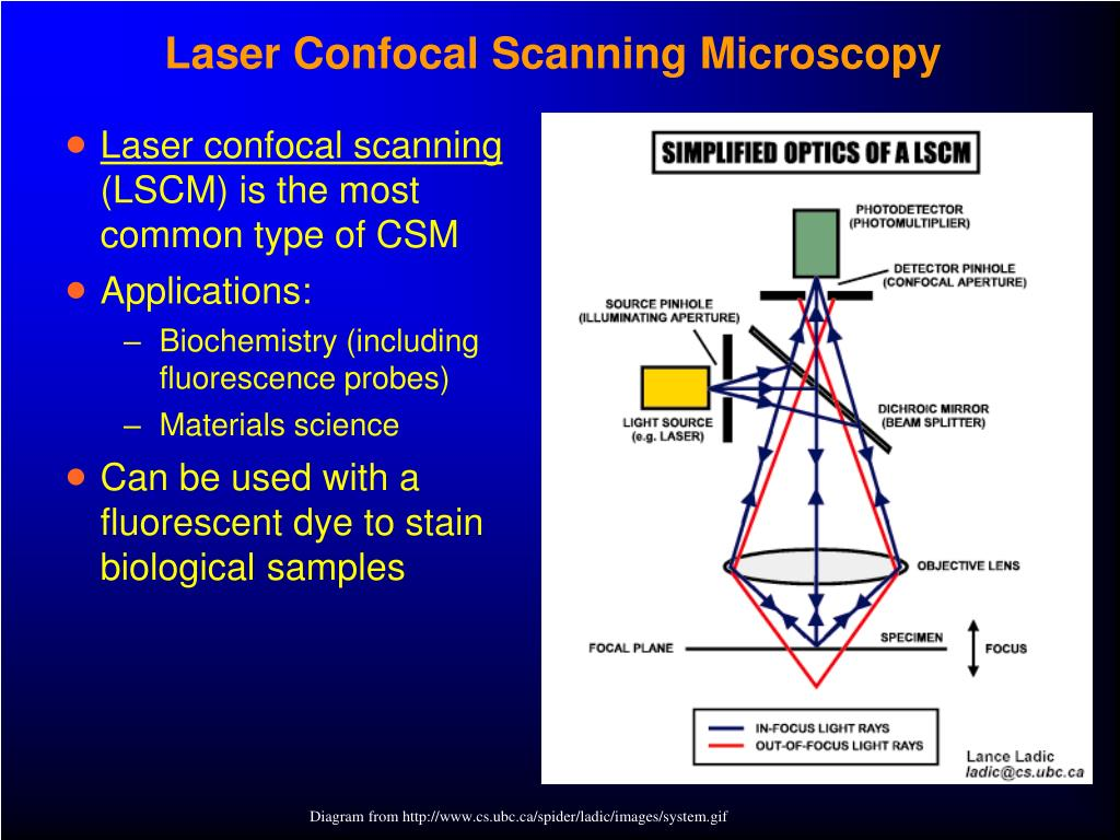 Laser Confocal Scanning Microscopy