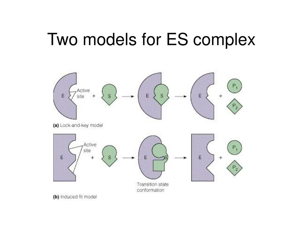 Two models for ES complex