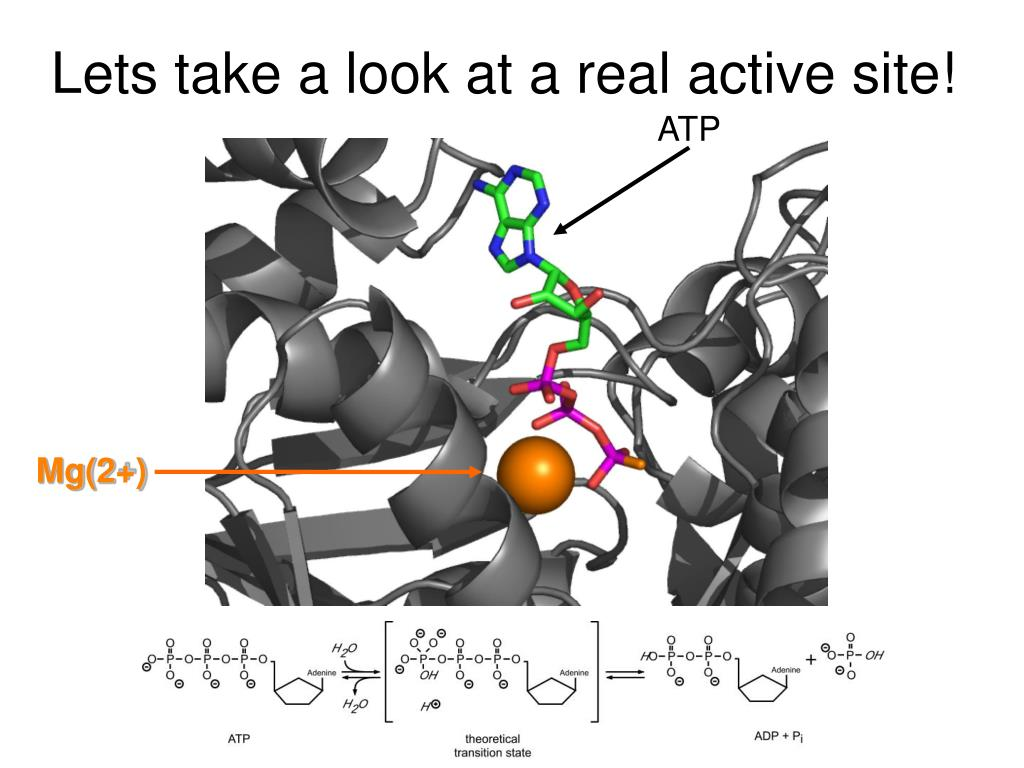 Lets take a look at a real active site!