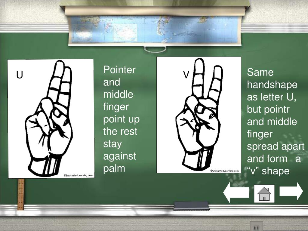 Pointer and middle finger point up the rest stay against palm