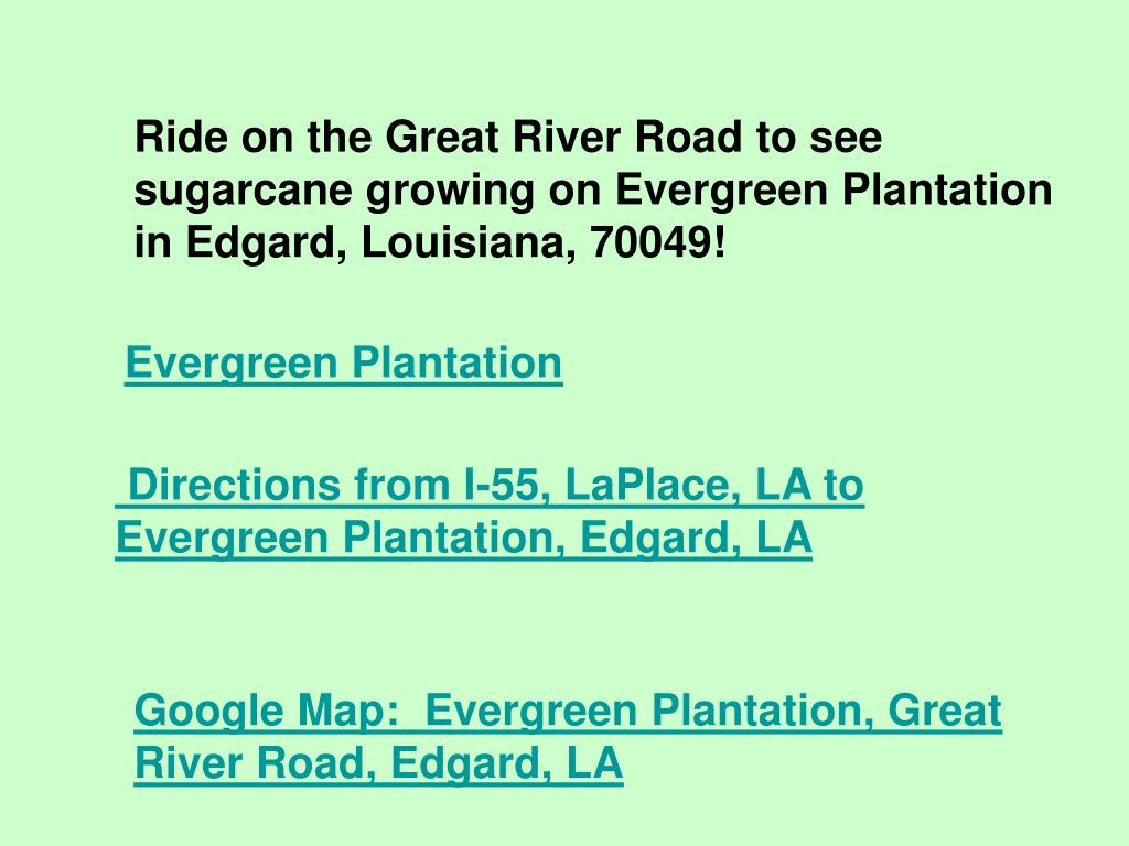 Ride on the Great River Road to see sugarcane growing on Evergreen Plantation in Edgard, Louisiana, 70049!