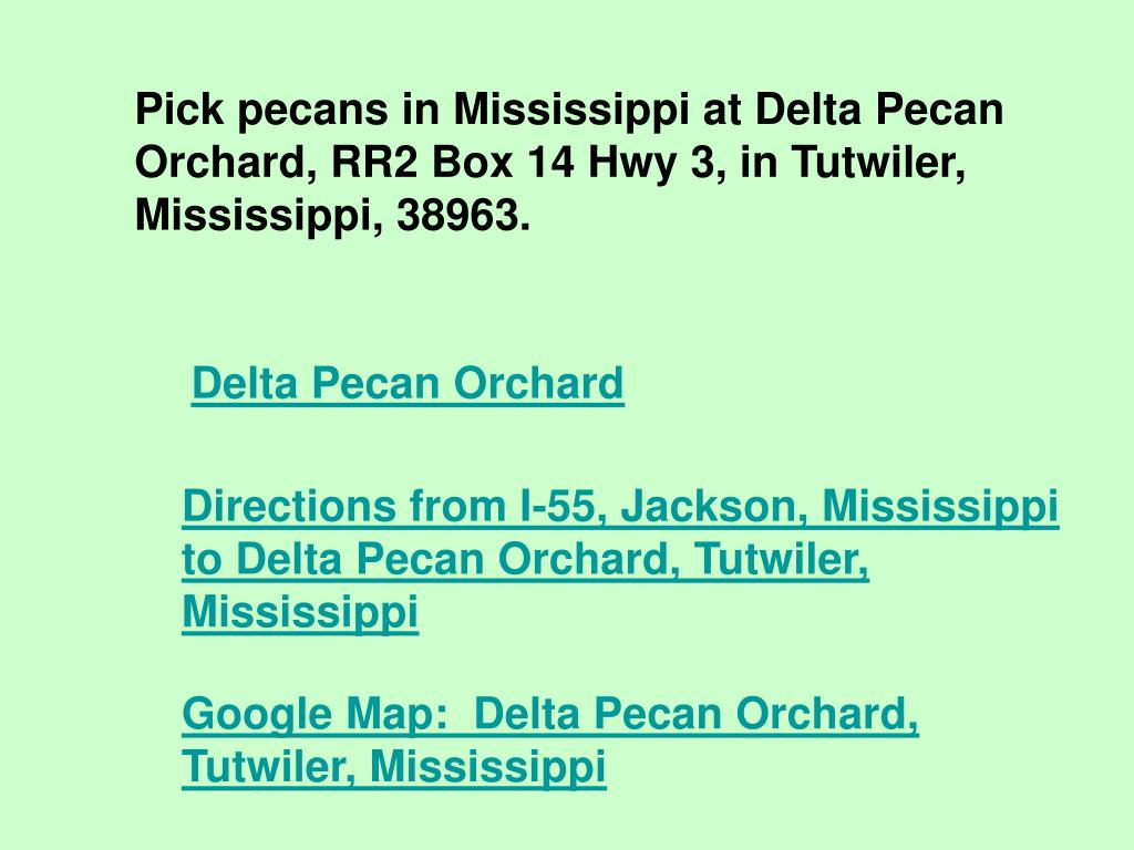 Pick pecans in Mississippi at Delta Pecan Orchard, RR2 Box 14 Hwy 3, in Tutwiler, Mississippi, 38963.
