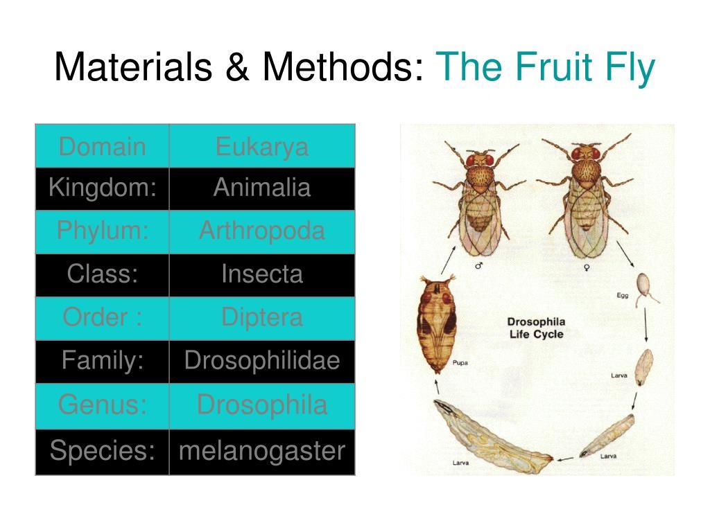 Materials & Methods: