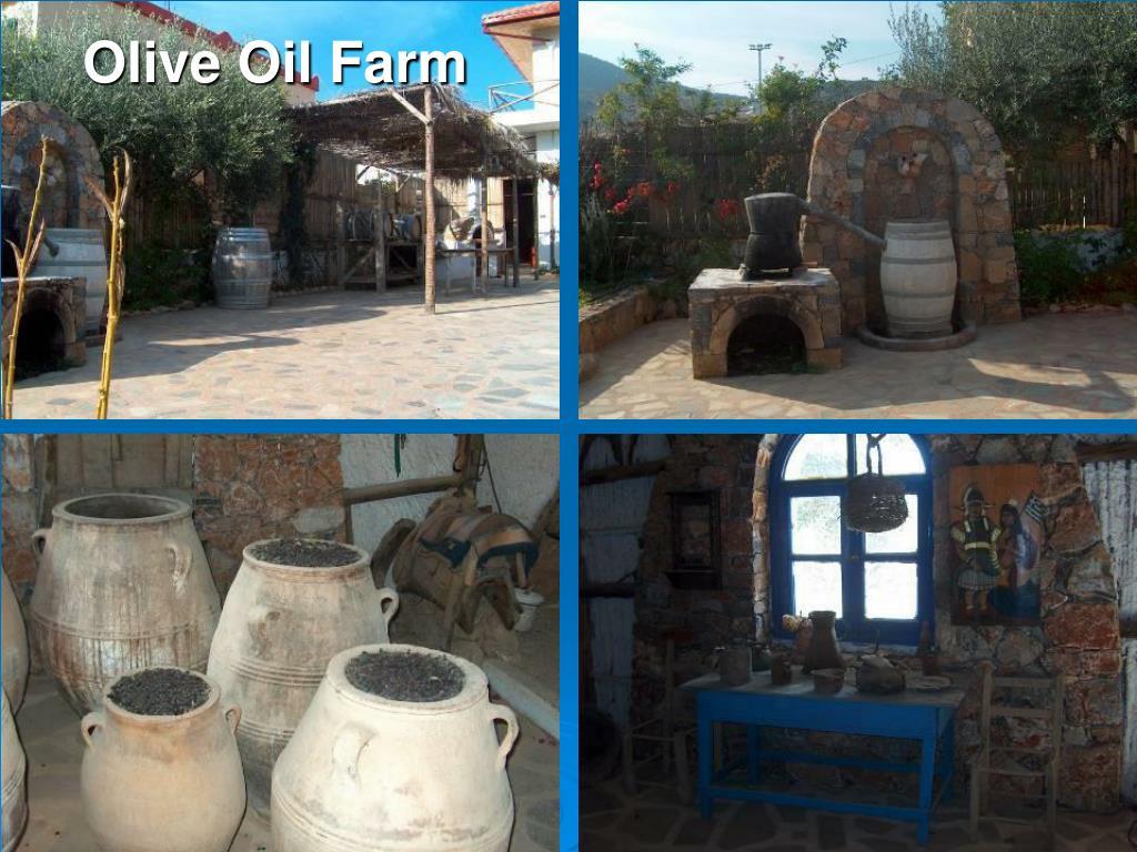Olive Oil Farm