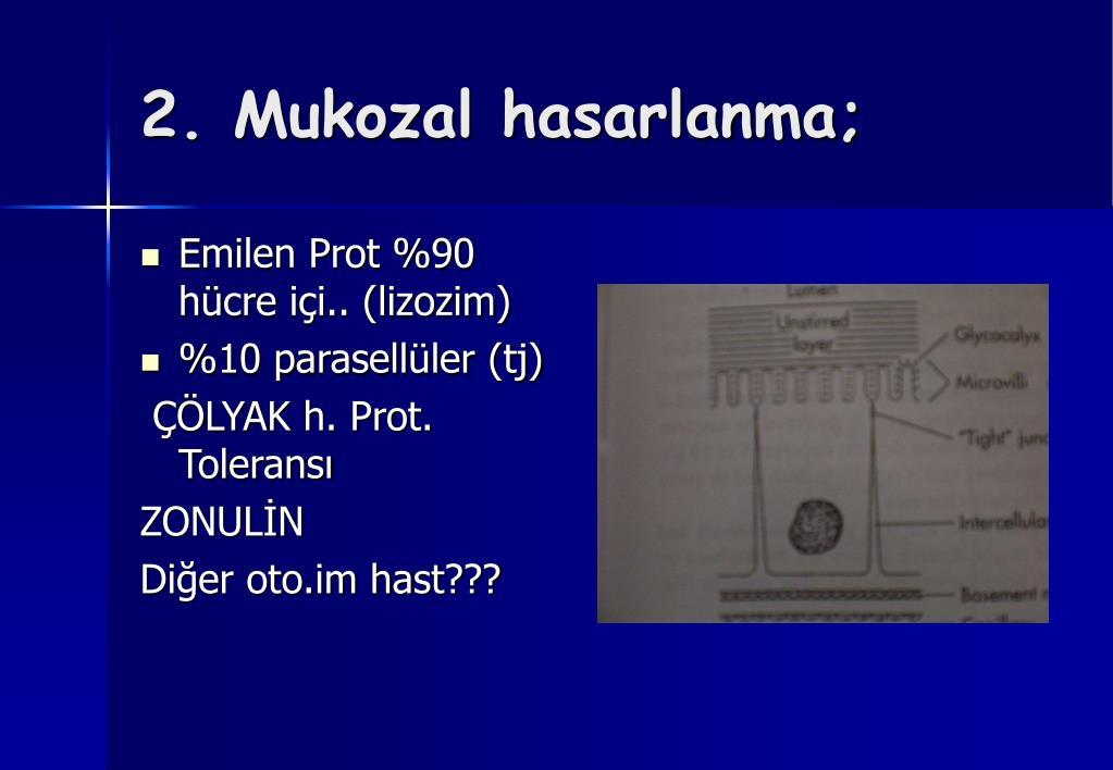 Emilen Prot %90 hücre içi.. (lizozim)