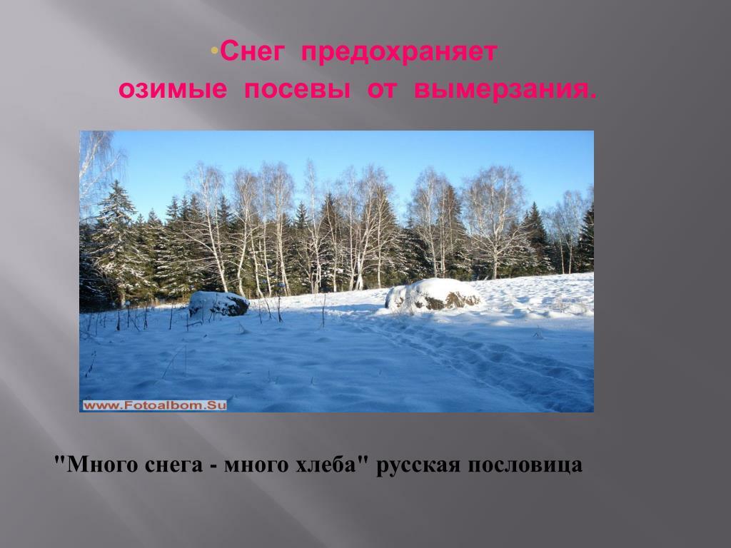 Снег  предохраняет