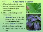 a functions of leaves