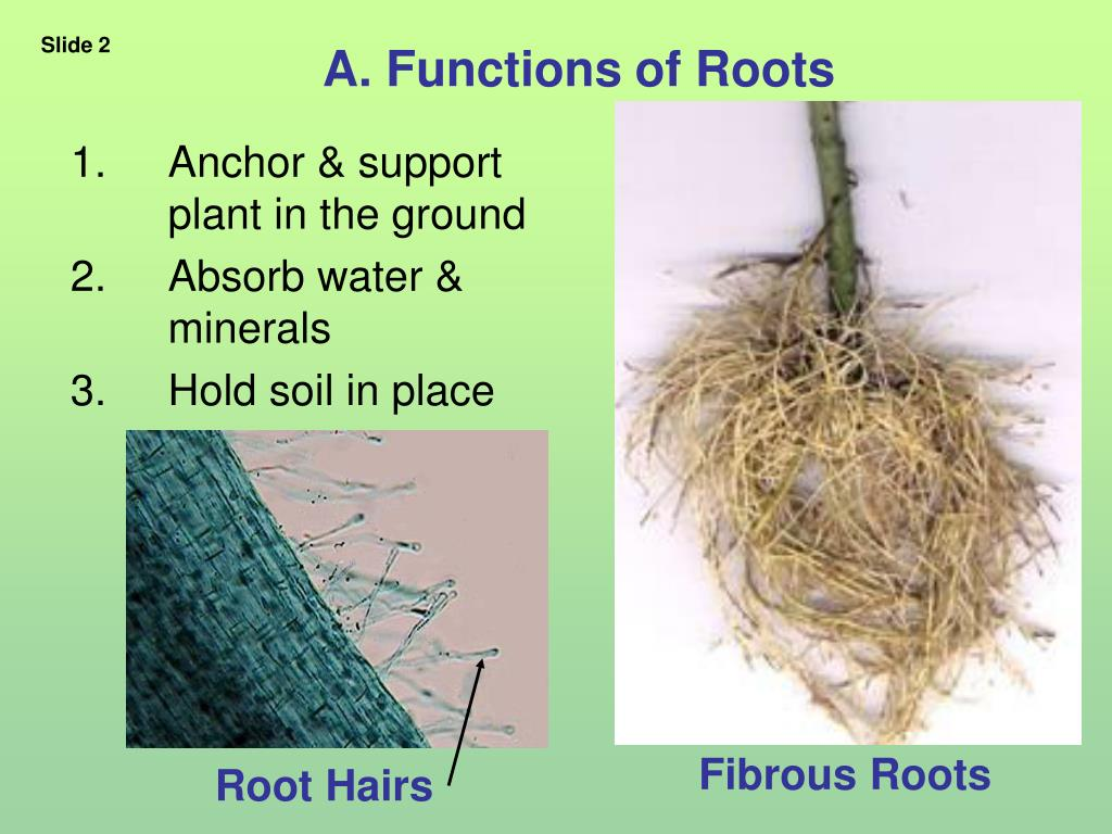 A. Functions of Roots