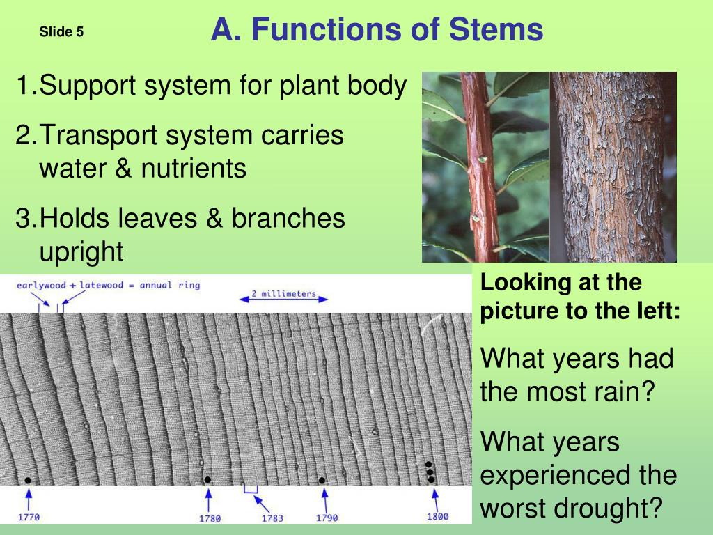 A. Functions of Stems