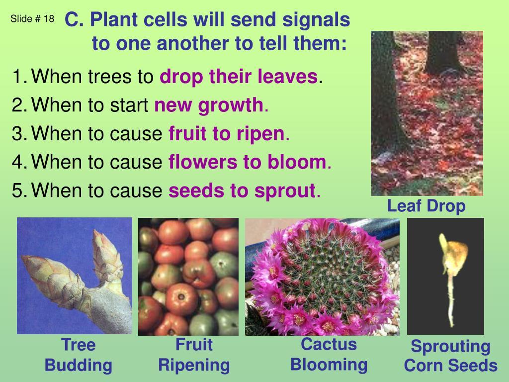 C. Plant cells will send signals