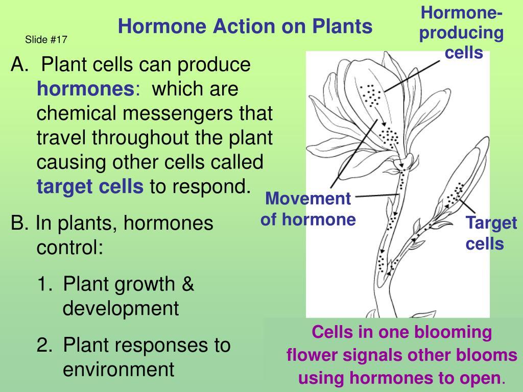 Hormone Action on Plants