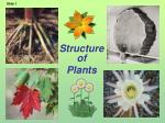 structure of plants