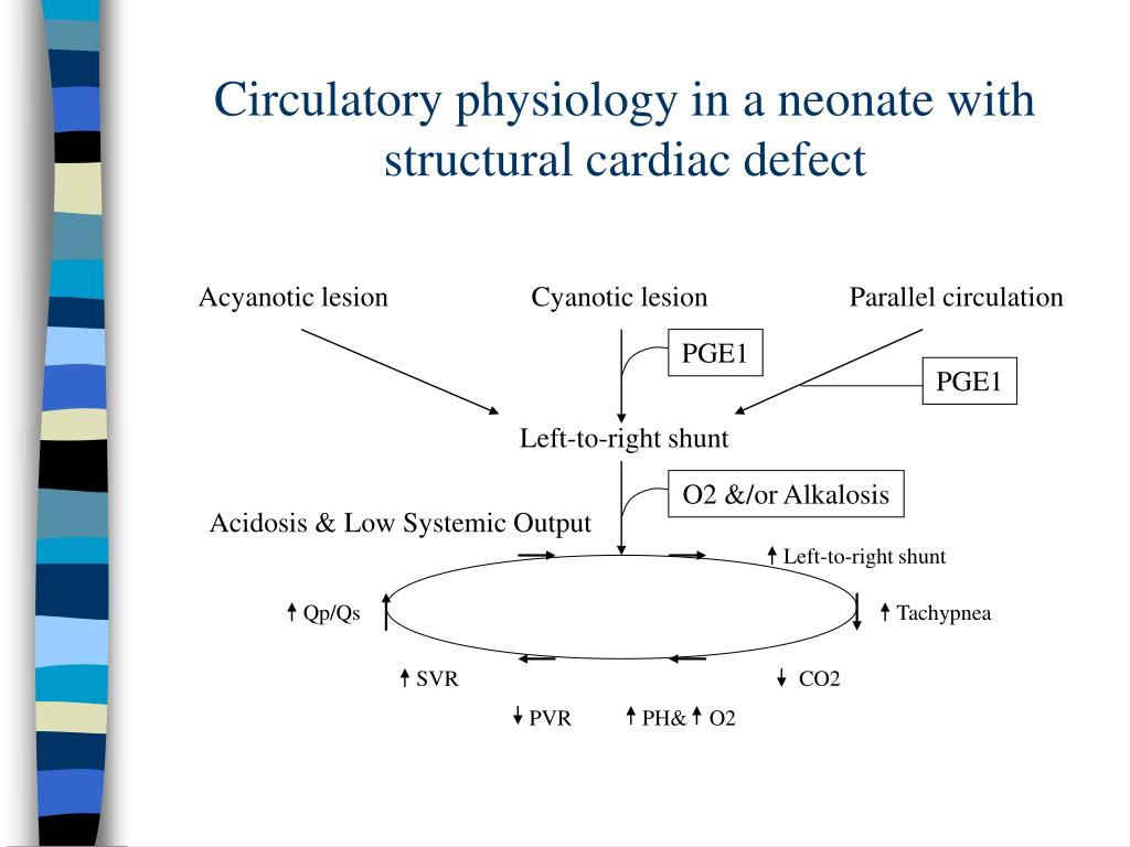 Circulatory physiology in a neonate with structural cardiac defect