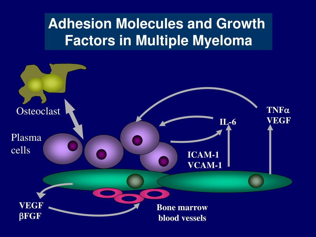 Adhesion Molecules and Growth
