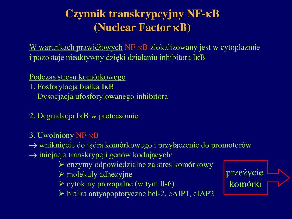 Czynnik transkrypcyjny NF-