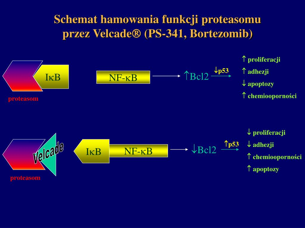 Schemat hamowania funkcji proteasomu przez Velcade