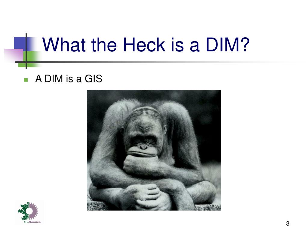 What the Heck is a DIM?