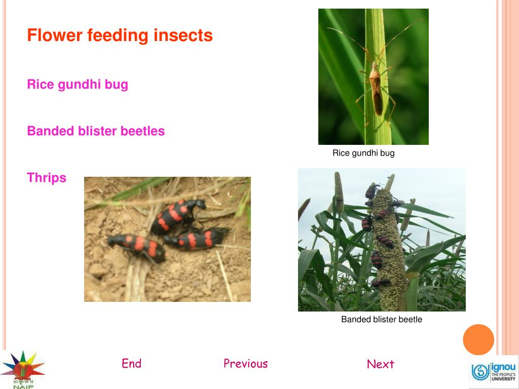 Flower feeding insects
