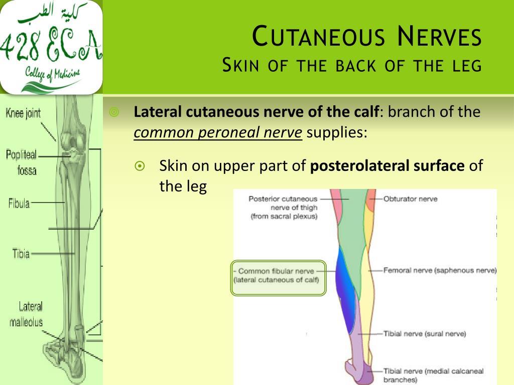 Cutaneous