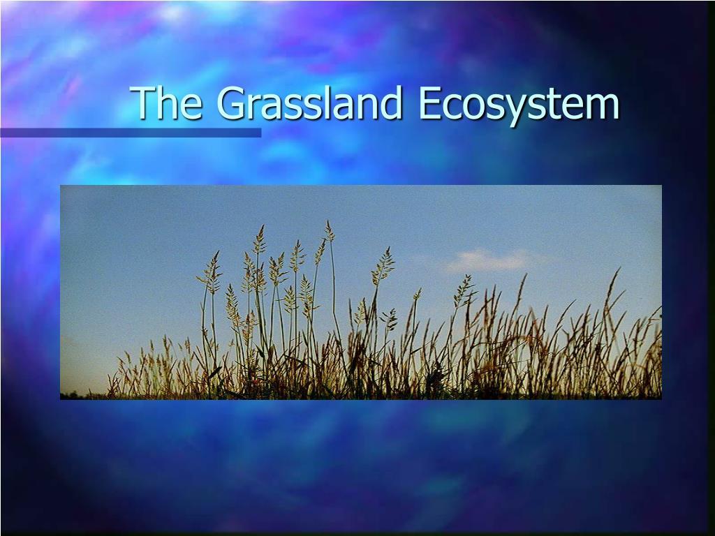 The Grassland Ecosystem