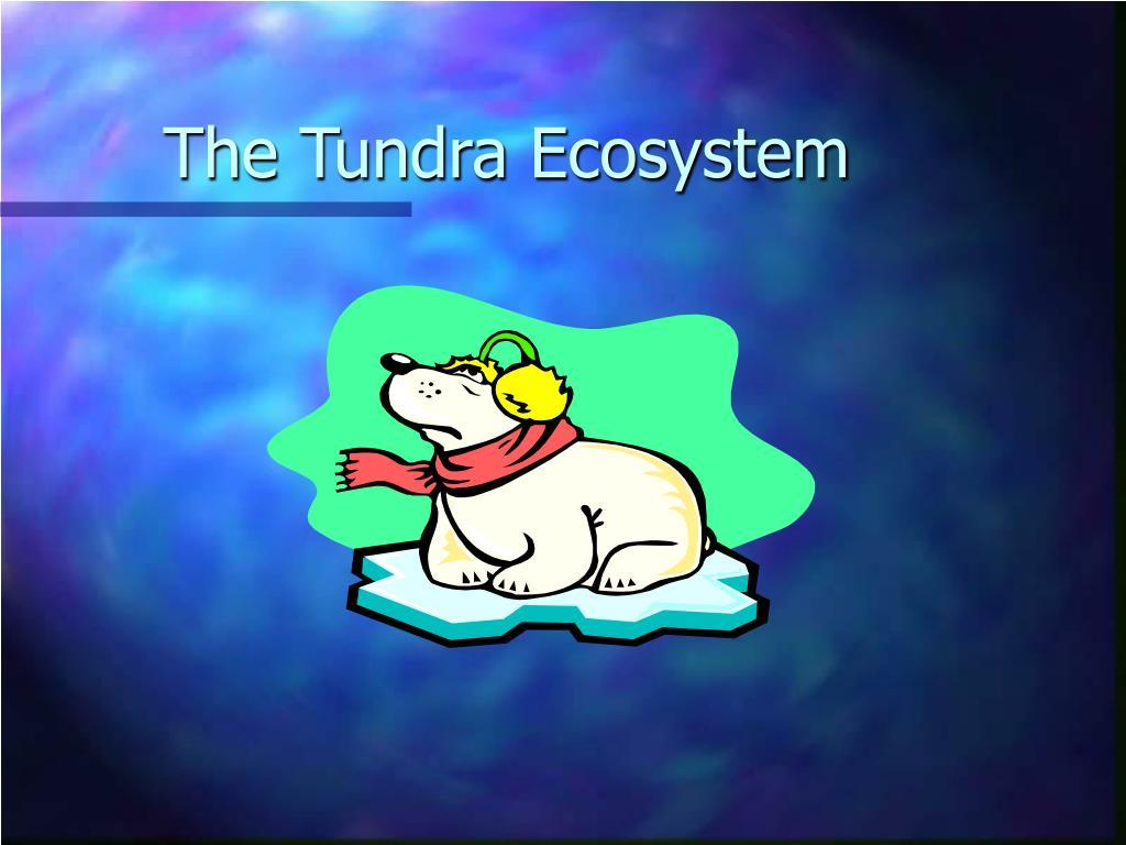 The Tundra Ecosystem