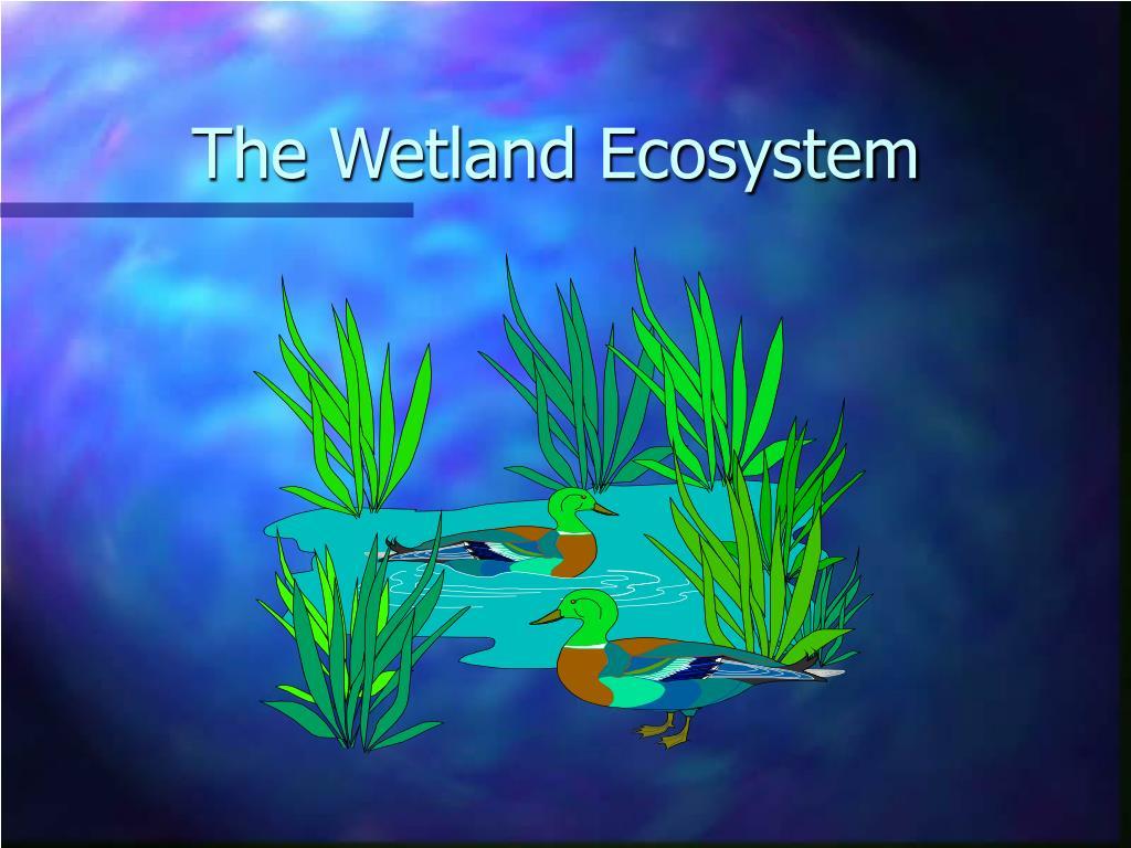 The Wetland Ecosystem