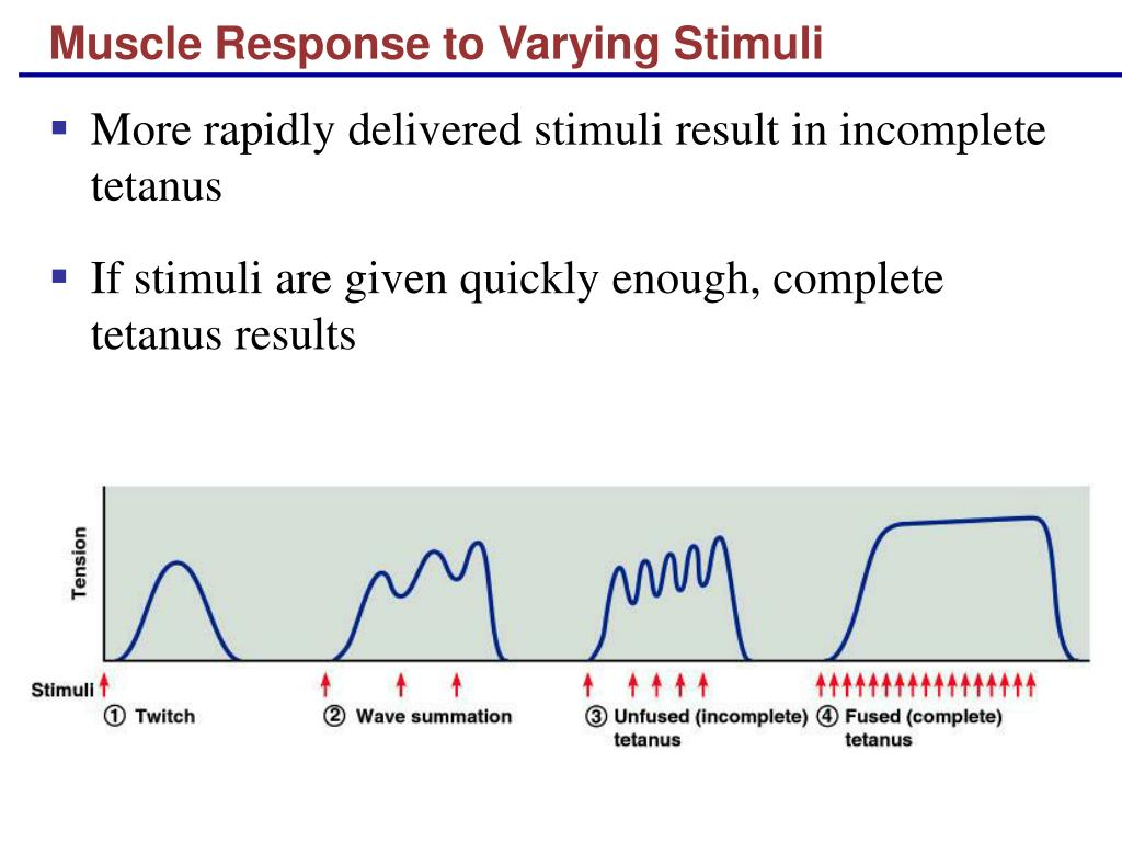 Muscle Response to Varying Stimuli