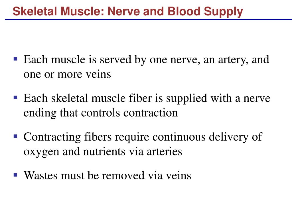Skeletal Muscle: Nerve and Blood Supply