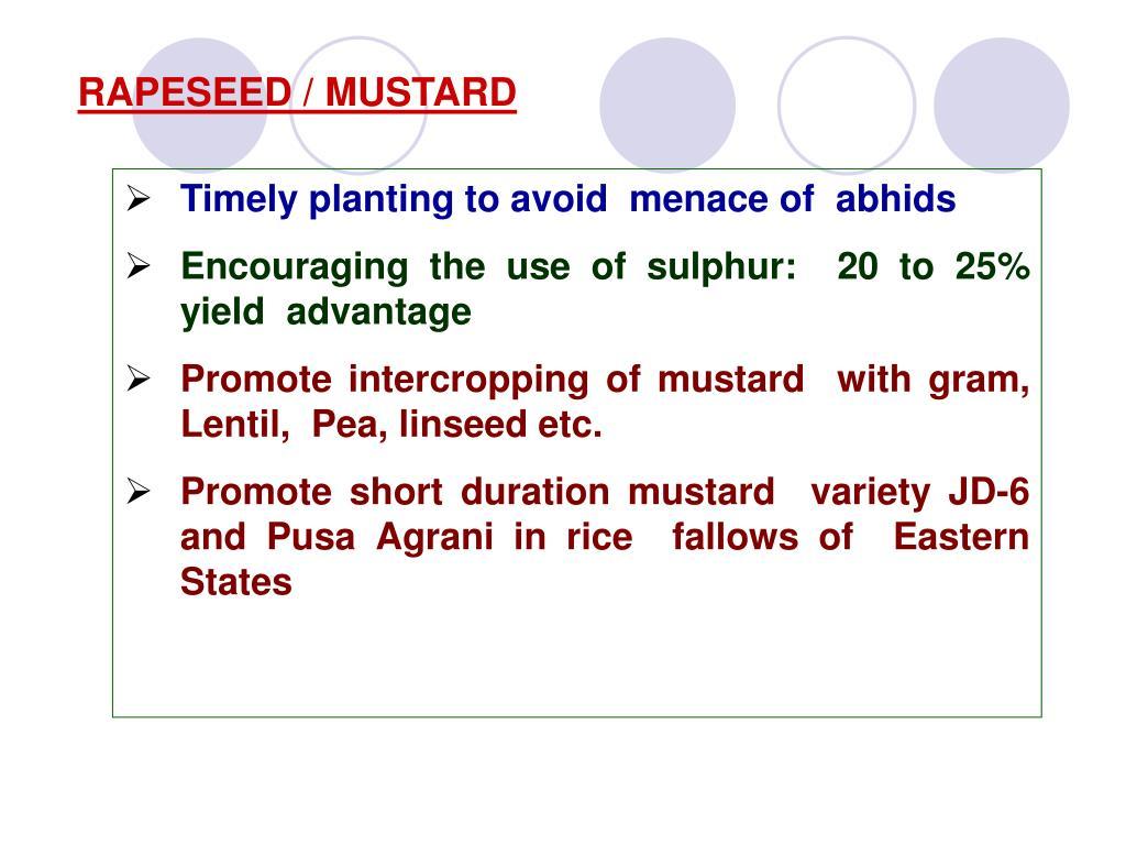 RAPESEED / MUSTARD