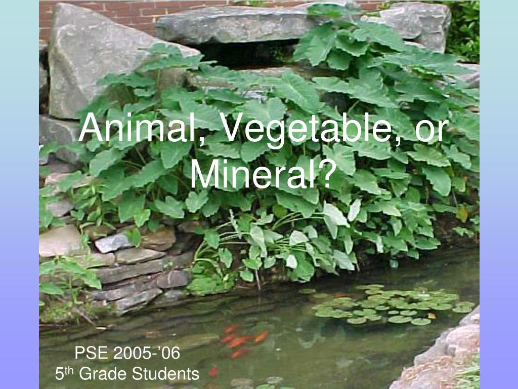 Animal, Vegetable, or Mineral?