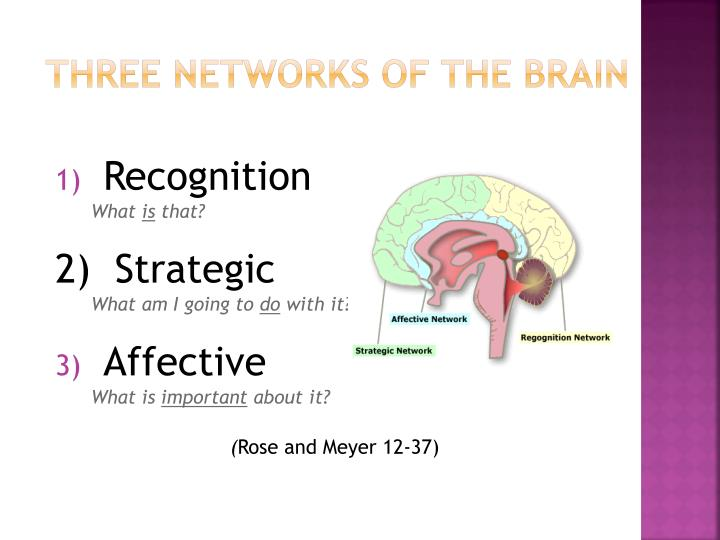Three networks of the brain