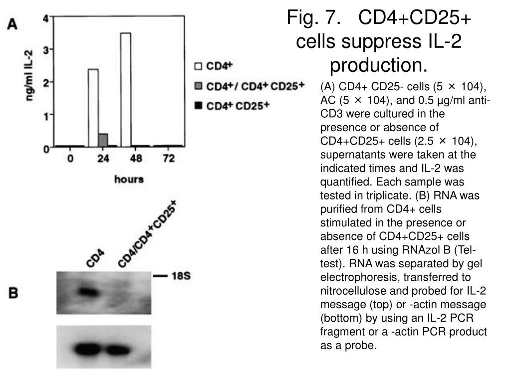 Fig. 7.   CD4+CD25+ cells suppress IL-2 production.