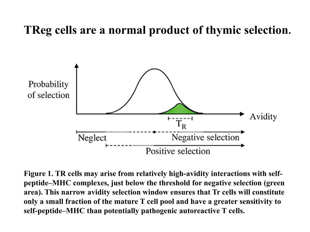 TReg cells are a normal product of thymic selection