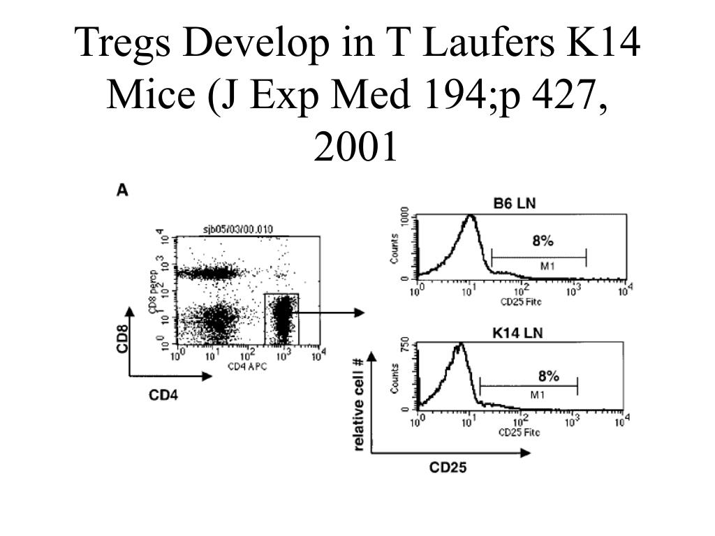 Tregs Develop in T Laufers K14 Mice (J Exp Med 194;p 427, 2001