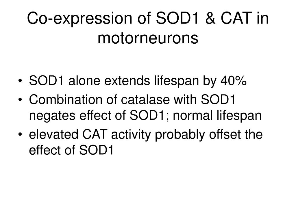 Co-expression of SOD1 & CAT in motorneurons