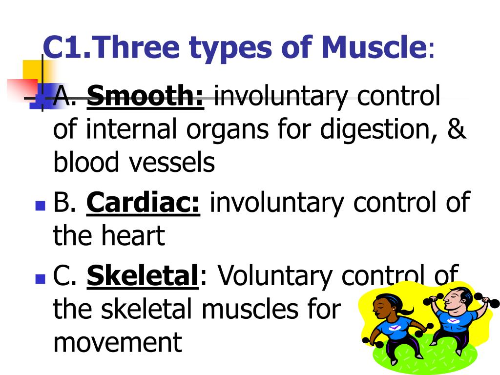 C1.Three types of Muscle