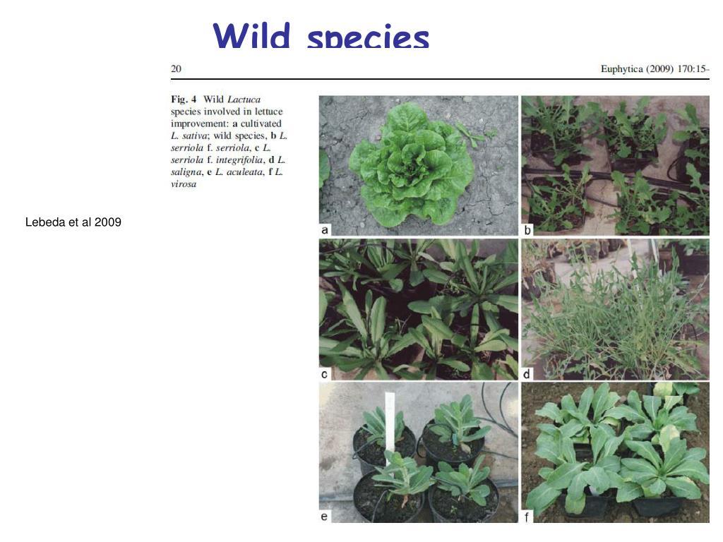 Wild species
