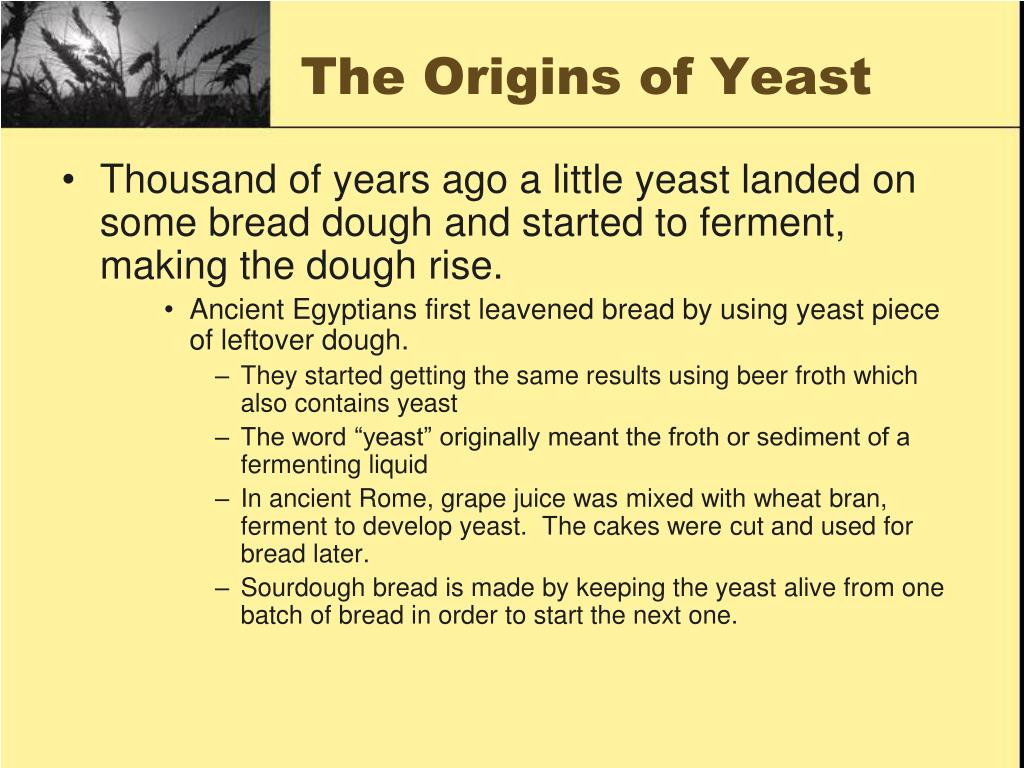 The Origins of Yeast