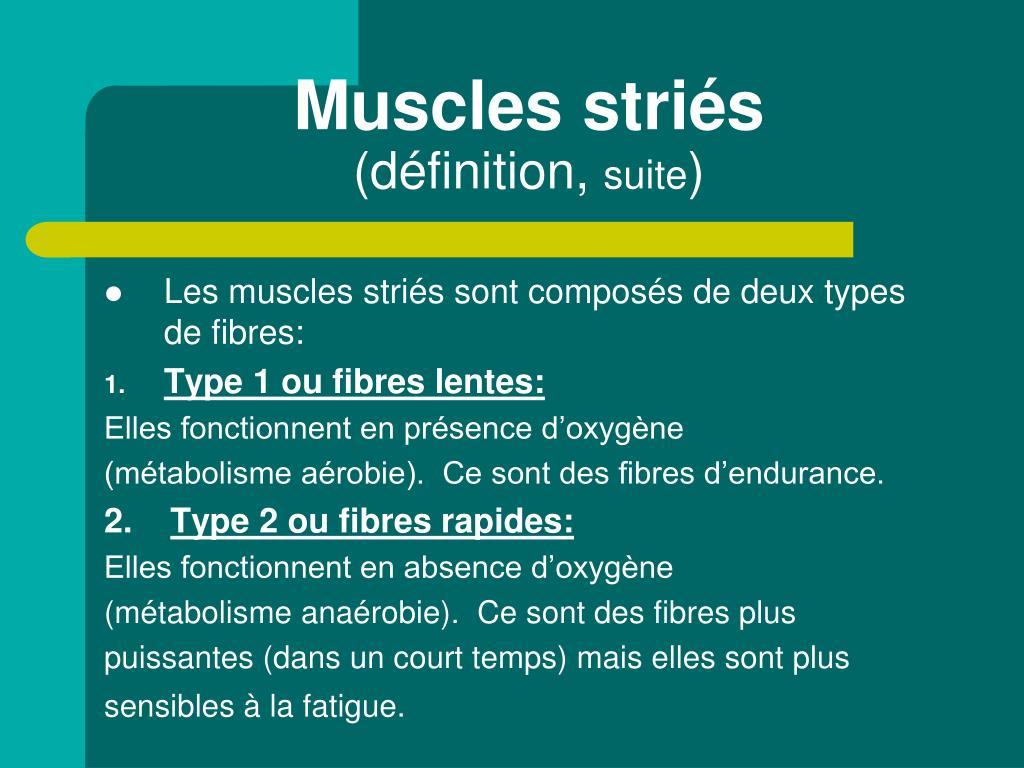 Muscles striés