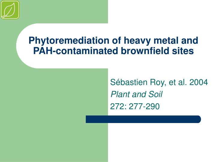 Phytoremediation of heavy metal and pah contaminated brownfield sites