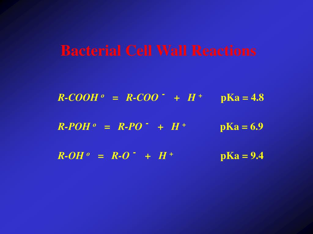Bacterial Cell Wall Reactions