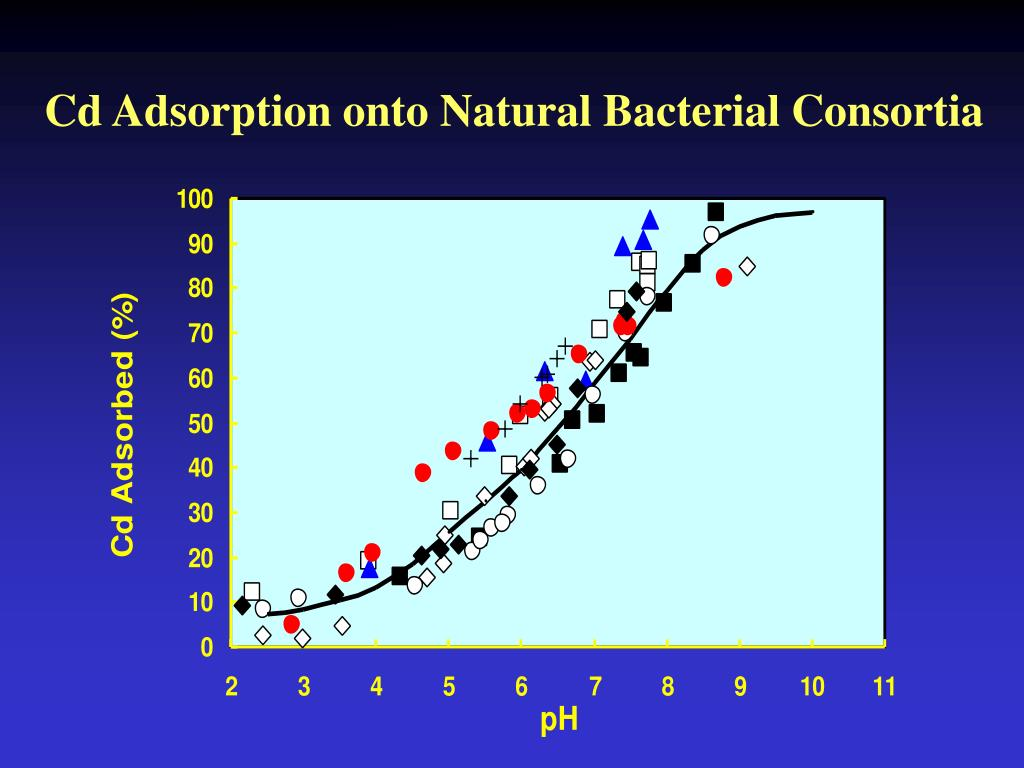 Cd Adsorption onto Natural Bacterial Consortia