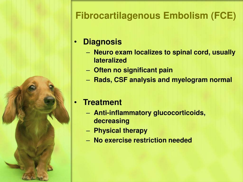 Fibrocartilagenous Embolism (FCE)