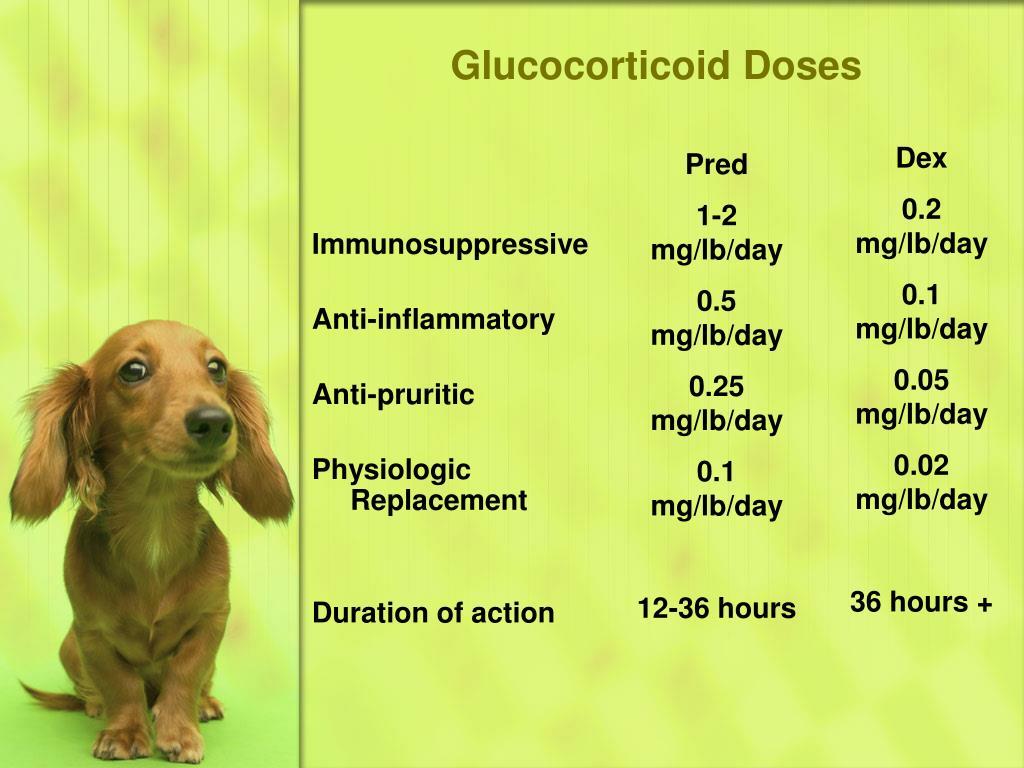 Glucocorticoid Doses
