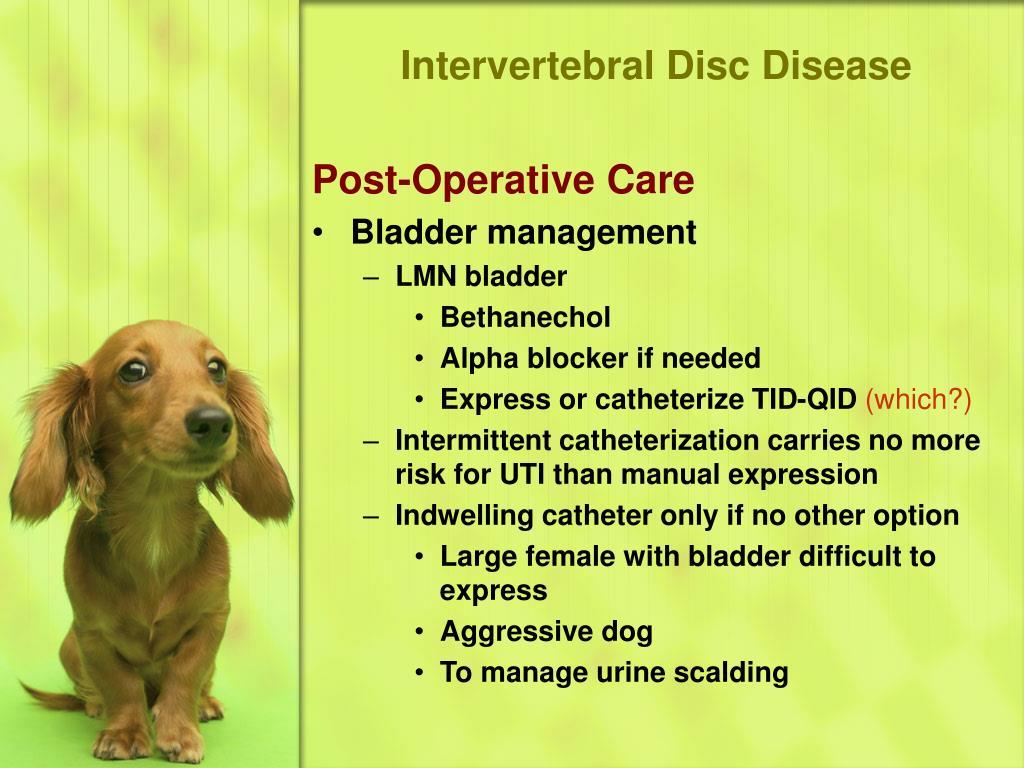 Intervertebral Disc Disease